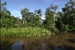 River Kumai