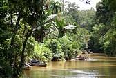Tropical bush Kumai river