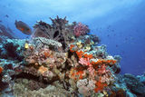 indonesia-coral-reef-961055[1]