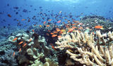 indonesia-reef-1613734[1]