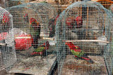 pramuka-bird-market-jakarta-indonesia-march-32098839[1]